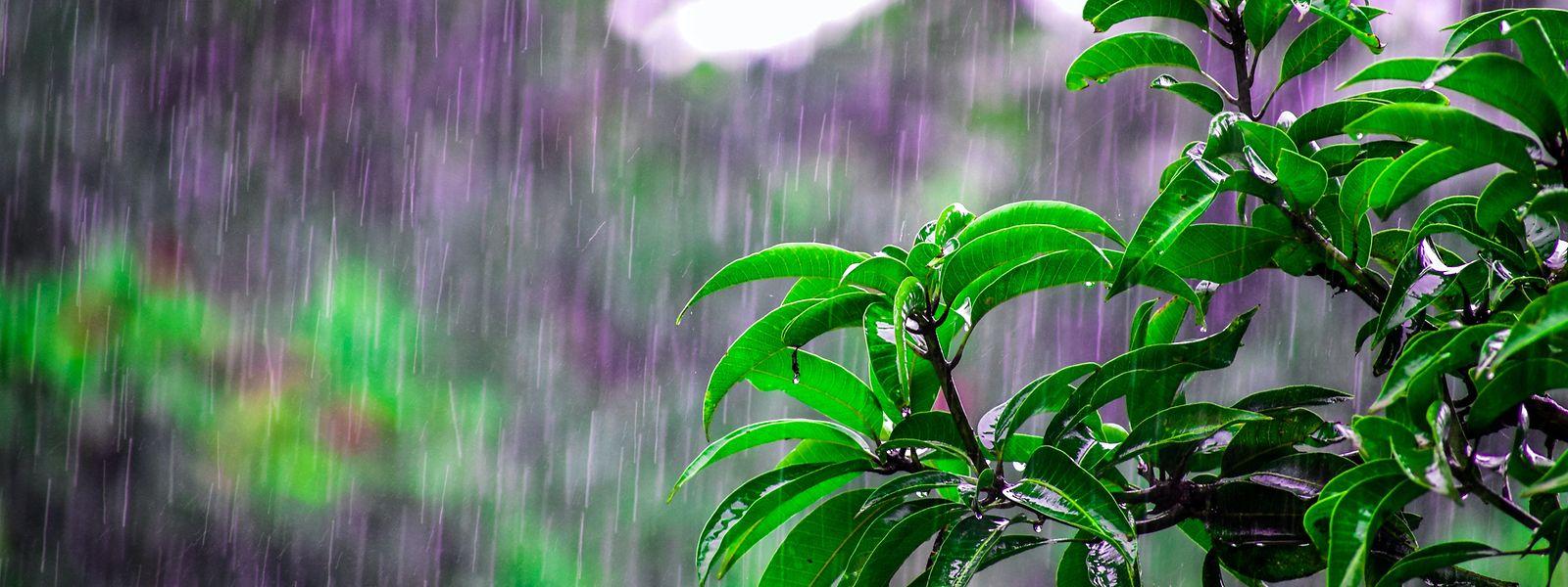 Die Hitze kühlt in den nächsten Tagen ab, es wird regnerisch.