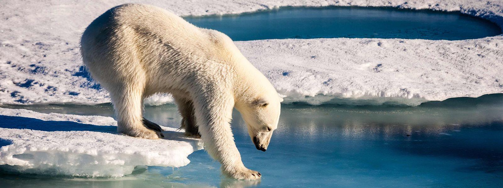 Einig sind sich die meisten Forscher, dass die Welt, ohne zusätzliche Anstrengungen, auf 3 bis 4 Grad Erwärmung zusteuert.