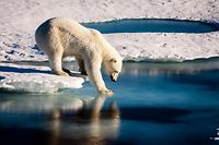 "(FILES) This file photo taken on August 22, 2015 shows a handout photo provided by the European Geosciences Union of a polar bear testing the strength of thin sea ice in the Arctic. President Donald Trump's administration is poised to announce the United States' withdrawal from the Paris climate agreement, US media reported on May 31, 2017. According to the Axios website, the first to break the news citing two sources with direct knowledge of the matter, Trump has reached a decision to pull out of the landmark deal on cutting global carbon emissions to curb global warming.Several US media including CNN, CBS, ABC and Politico also reported that the White House was expected to announce a withdrawal from the 2015 accord once details of the process have been worked out.  / AFP PHOTO / European Geosciences Union / Mario HOPPMANN / RESTRICTED TO EDITORIAL USE - MANDATORY CREDIT ""AFP PHOTO / MARIO HOPPMANN / EUROPEAN GEOSCIENCES UNION""- NO MARKETING NO ADVERTISING CAMPAIGNS - DISTRIBUTED AS A SERVICE TO CLIENTS"