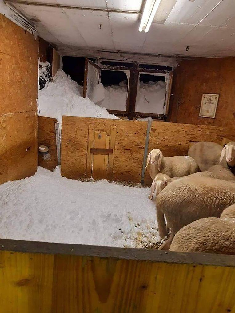 Schneemassen liegen nach einem Lawinenabgang am Großvenediger in Osttirol in einem Schafstall.