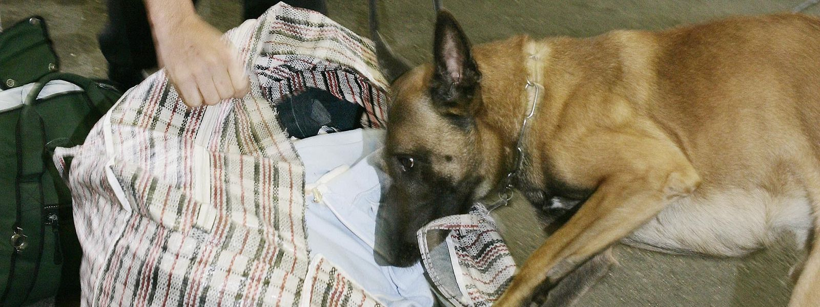 Les deux chiens antidrogue pourront mettre leur nez partout en prison, y compris dans les affaires des visiteurs.