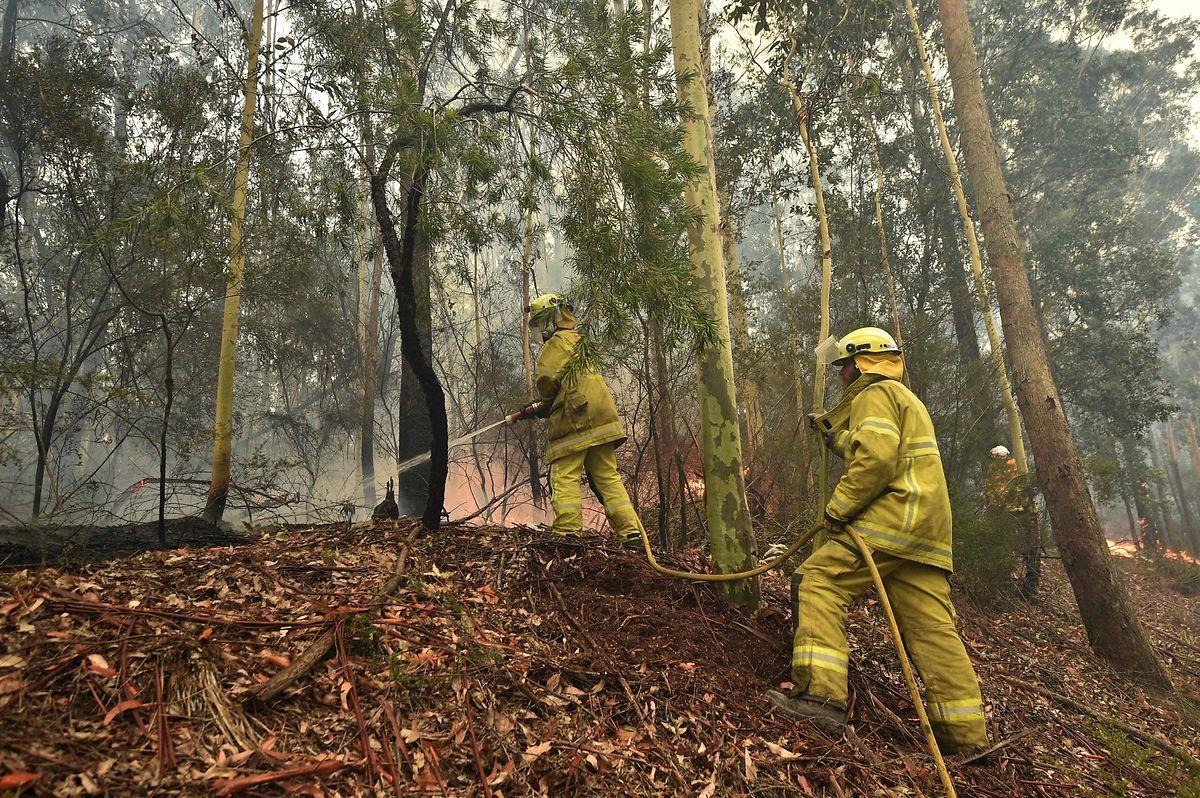 Buschfeuer in Australien: Schrecken nimmt kein Ende