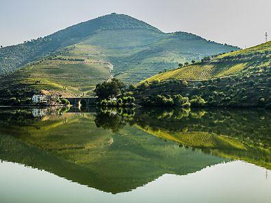 Grün so weit das Auge reicht: Weinreben, Korkbäume und Wacholderbüsche schmücken das 927 Kilometer lange,mäandernde Dourotal.