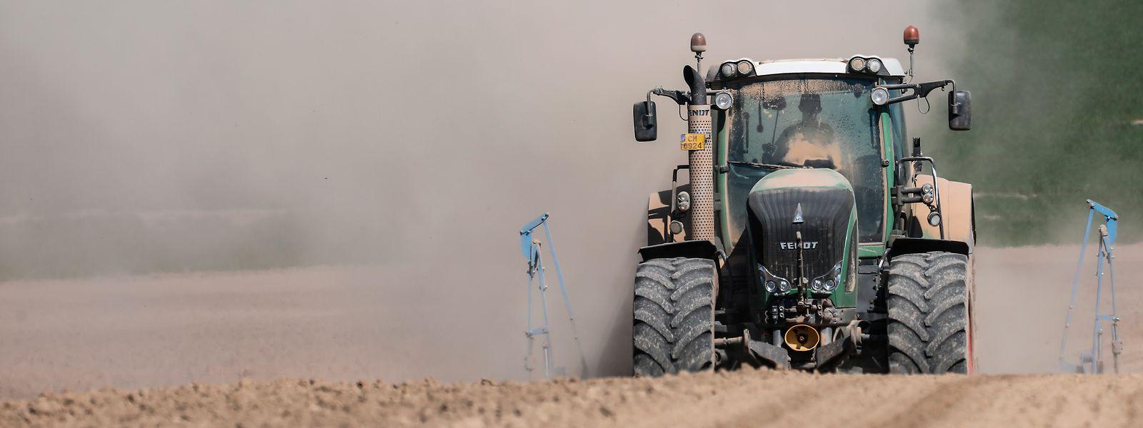 Staubige Angelegenheit: Die Landwirte haben bereits drei trockene Jahre hinter sich.