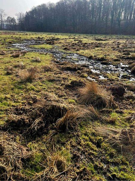 Nach einem Sickerbrand in einer belgischen Biogasanlage ist die Attert verschmutzt.