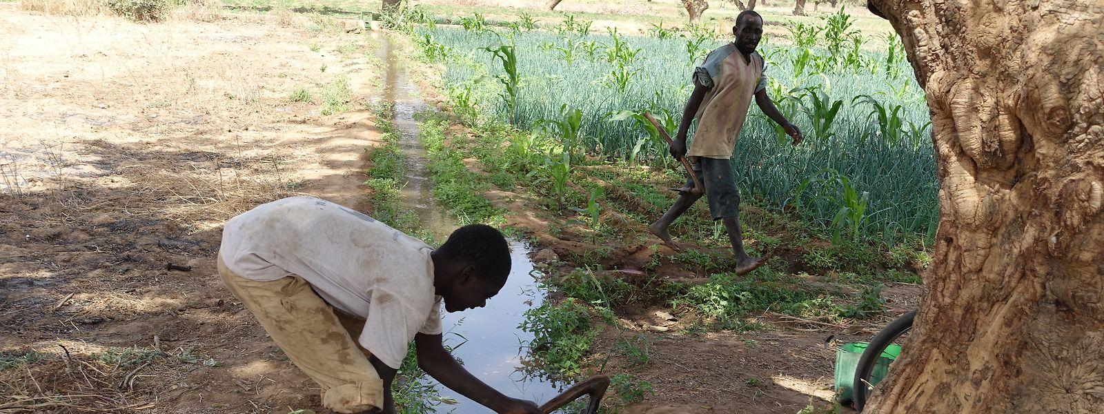 Feldarbeiter legen in Burkina Faso Gräben zur Bewässerung von Ackerflächen an.