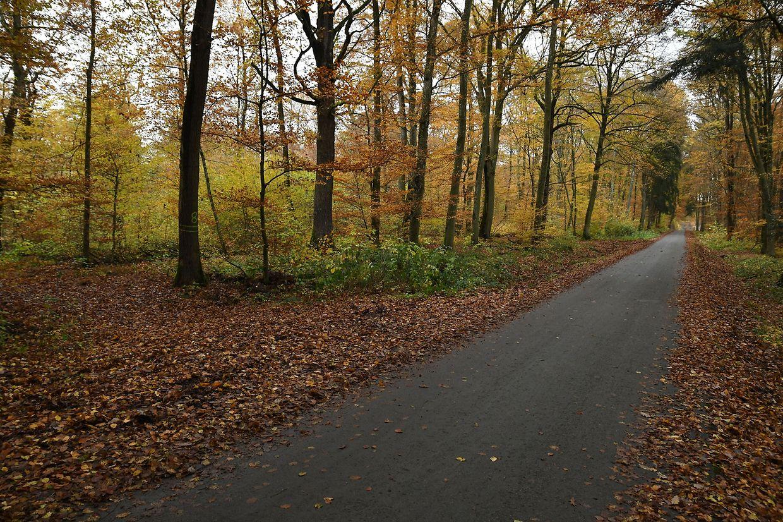 Der Leichnam wurde in Parzelle 8 in einem Wald in Leudelingen entdeckt, rund zehn Meter von der Fahrbahn entfernt.
