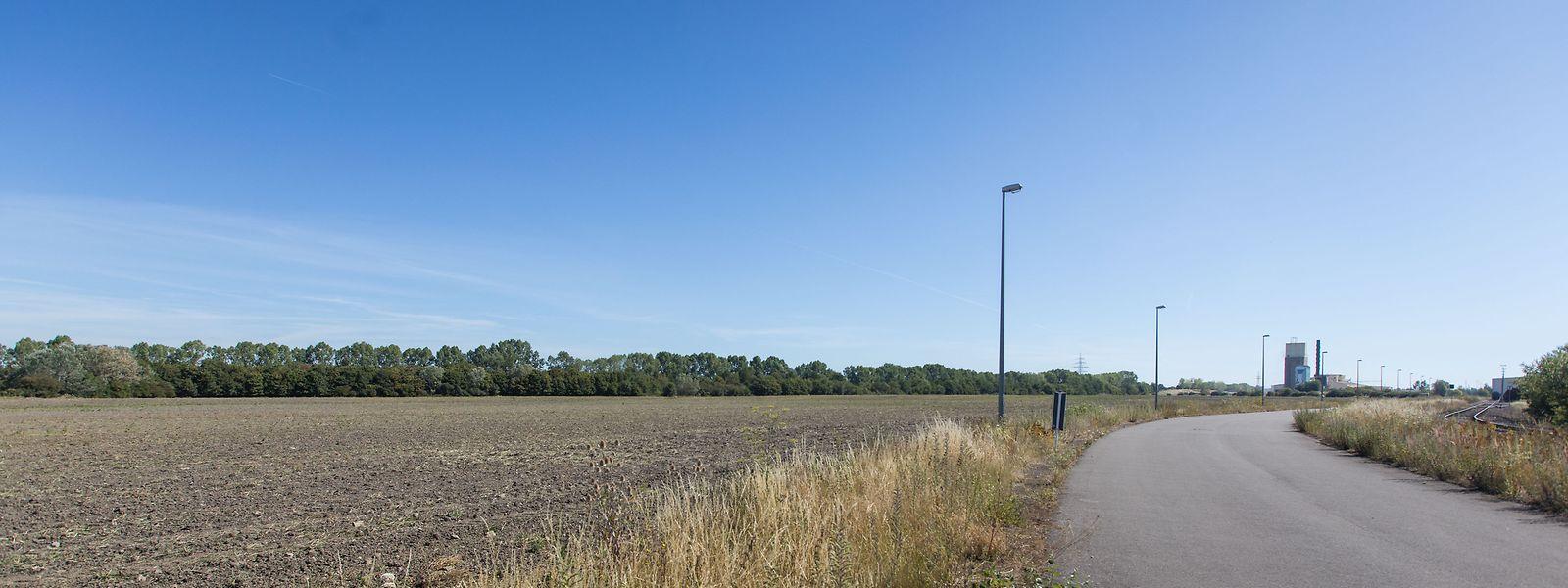 Auf diesem rund 15 Hektar großen Gelände bei Bettemburg soll die künftige Molkerei entstehen.