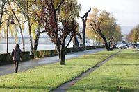 Stark zurückgeschnitten präsentieren sich die Bäume auf der Esplanade.