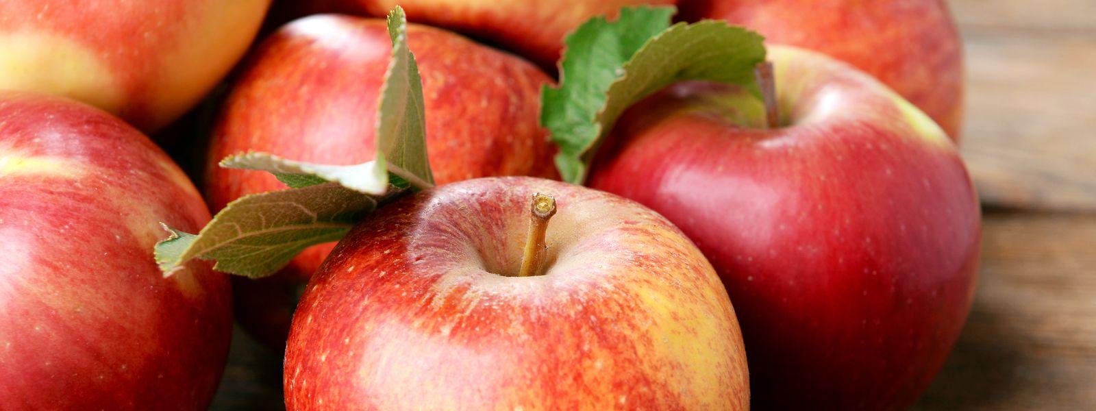 Das sogenannte Schouluebstprogramm soll dabei helfen, dass Kinder und Jugendliche öfters mal zu Äpfeln und anderem Obst greifen – weggeworfen wird dabei nichts.