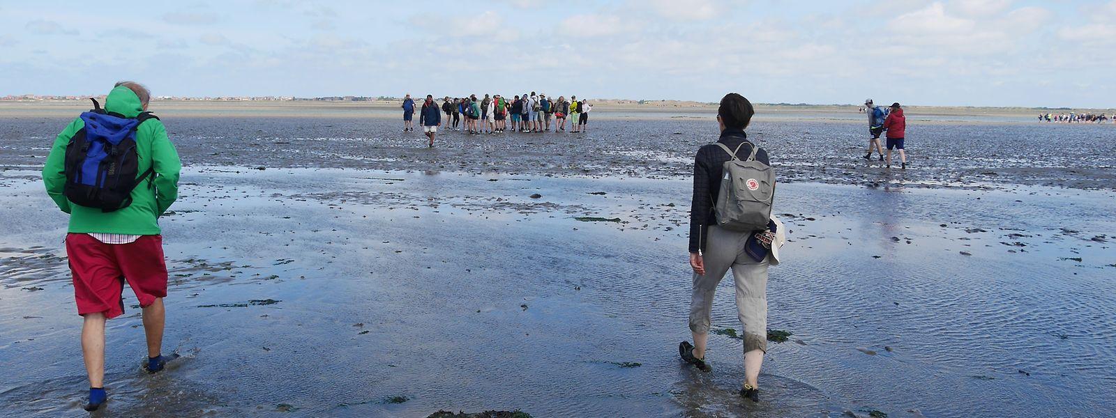 Eine Wanderung im Wattenmeer.