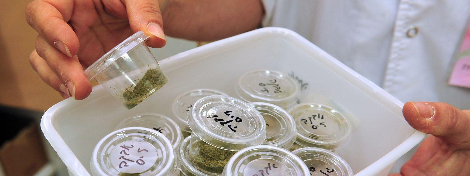 Le pays dispose actuellement d'une autorisation à hauteur de 270 kg d'importation de cannabis à usage thérapeutique.