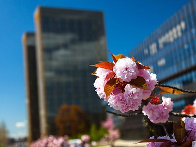 Flowers in front of the European Court of Justice towers in Kirchberg