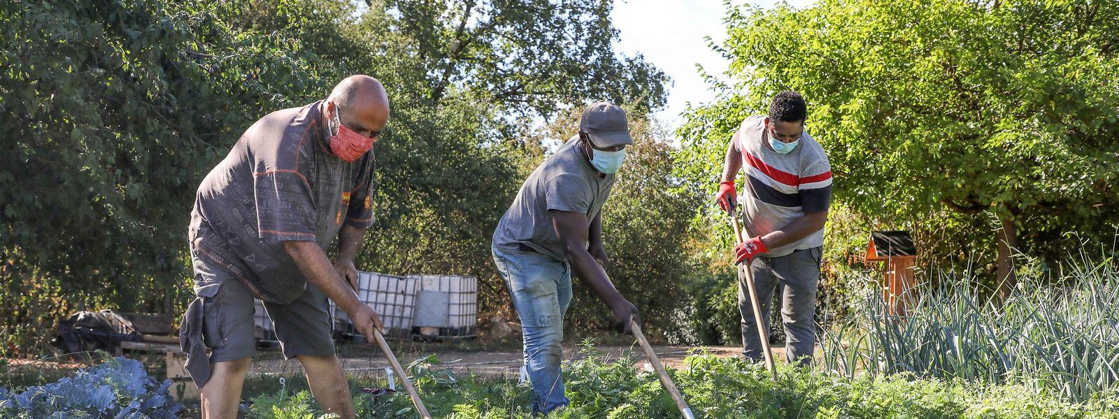 Die Arbeit in dem solidarischen Betrieb ist vielfältig. Sie reicht vom Gartenbau bis zum Verkauf.