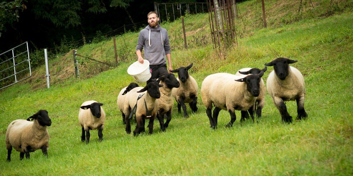 Von seinen Schafen allein kann Tom Funck finanziell nicht überleben. Auf sie verzichten möchte er jedoch auf keinen Fall.
