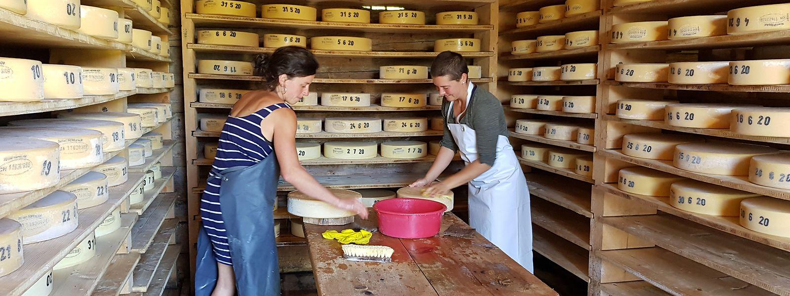 Lotta Bess (28) aus der Nähe von Tübingen und ihre Freundin Jule Fründt (25) aus Marburg wischen in einem Käselager auf einer Schweizer Alp im Berner Oberland die Käselaibe mit Salzwasser ab. Sämtliche Käse in den Regalen haben die beiden selbst gemacht.