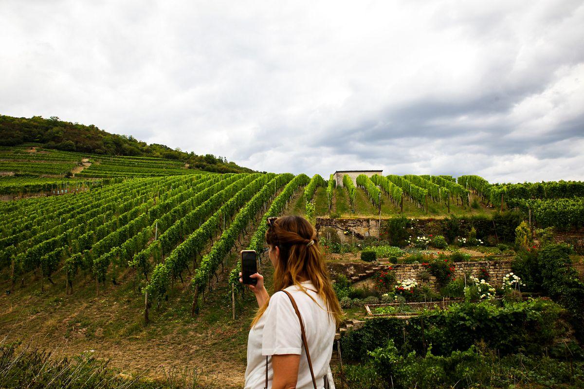Os vinhedos ao longo do Moselle são um dos grandes atrativos da rota da N10, entre Schengen e Grevenmacher.