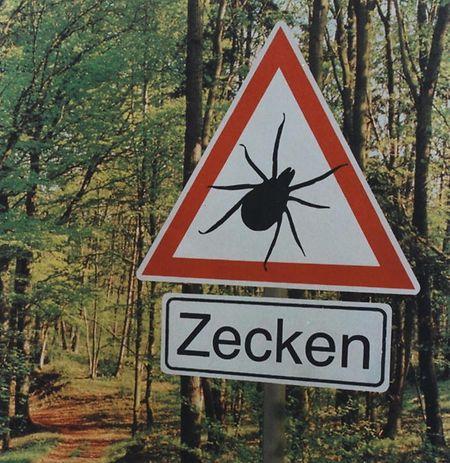 A doença de Lyme, transmitida pela carraça, pode ser apanhada nas florestas ou parques públicos