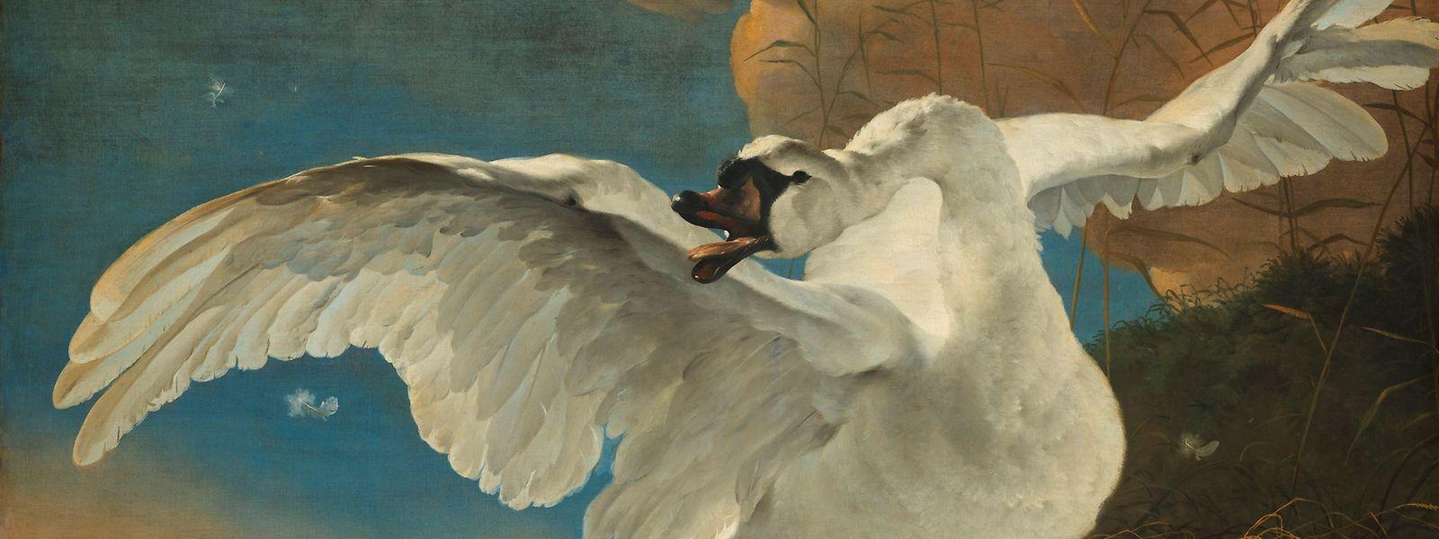 """Jan Asselijn malte auf eine Allegorie von Johan de Witt circa 1650 """"The Threatened Swan"""", bei dem der Schwan als Symbol für die Niederlande eingesetzt wird."""