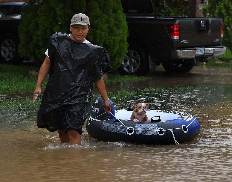 In Texas leiden nicht nur die Menschen unter den Überschwemmungen, sondern auch ihre Haustiere.