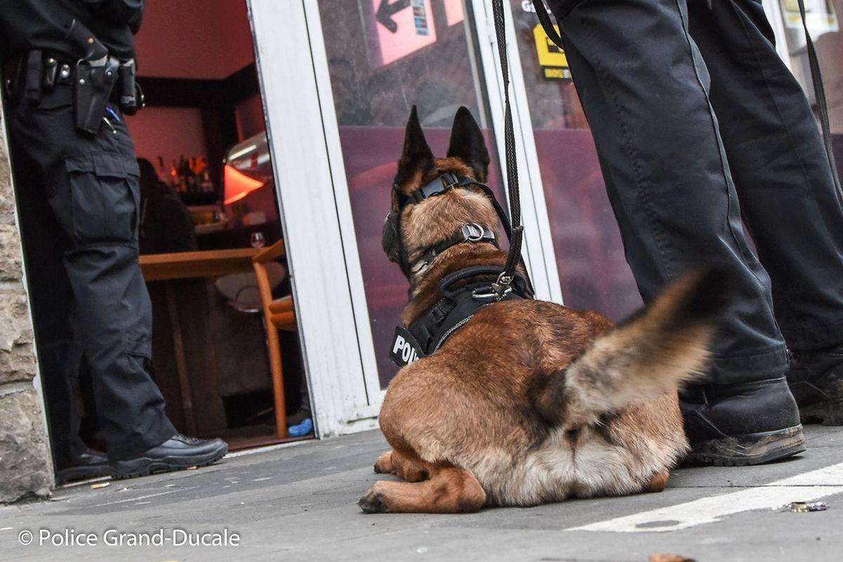 Auch Drogenspürhunde waren im Einsatz.