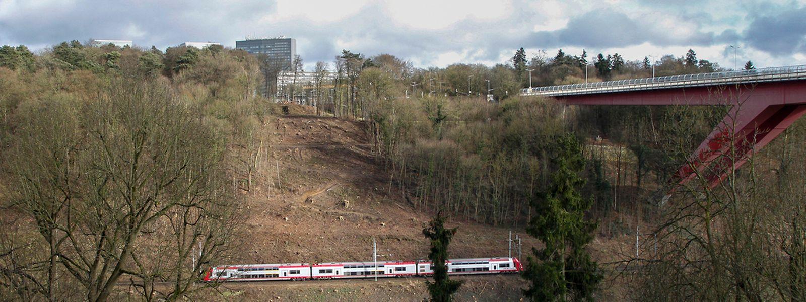 Auf einer Fläche von 1,5 Hektar wurden im Hinblick auf die Großbaustelle Bäume gerodet. Zum Ausgleich werden in der Gemeinde Roeser auf einem Gebiet von 1,4 Hektar neue Bäume geflanzt.