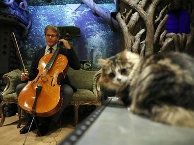 "David Teie, an US composer and cellist, prepares to play his cello during a interview to ptomote his new album ""Music for Cats"" at Lady Dinah's Cat Emporium in London on October 18, 2016.  Teie's new album, a collection of tracks that brings ""scientifically credible"" music to felines aimed at enriching cat's lives, is to be released by Universal Music .  / AFP PHOTO / ADRIAN DENNIS"
