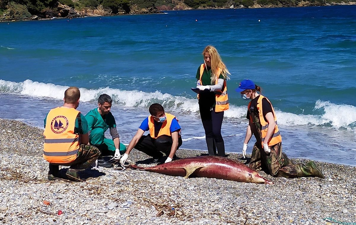 Hier kommt jede Hilfe zu spät: Der Delfin wurde bereits tot am Strand angespült.