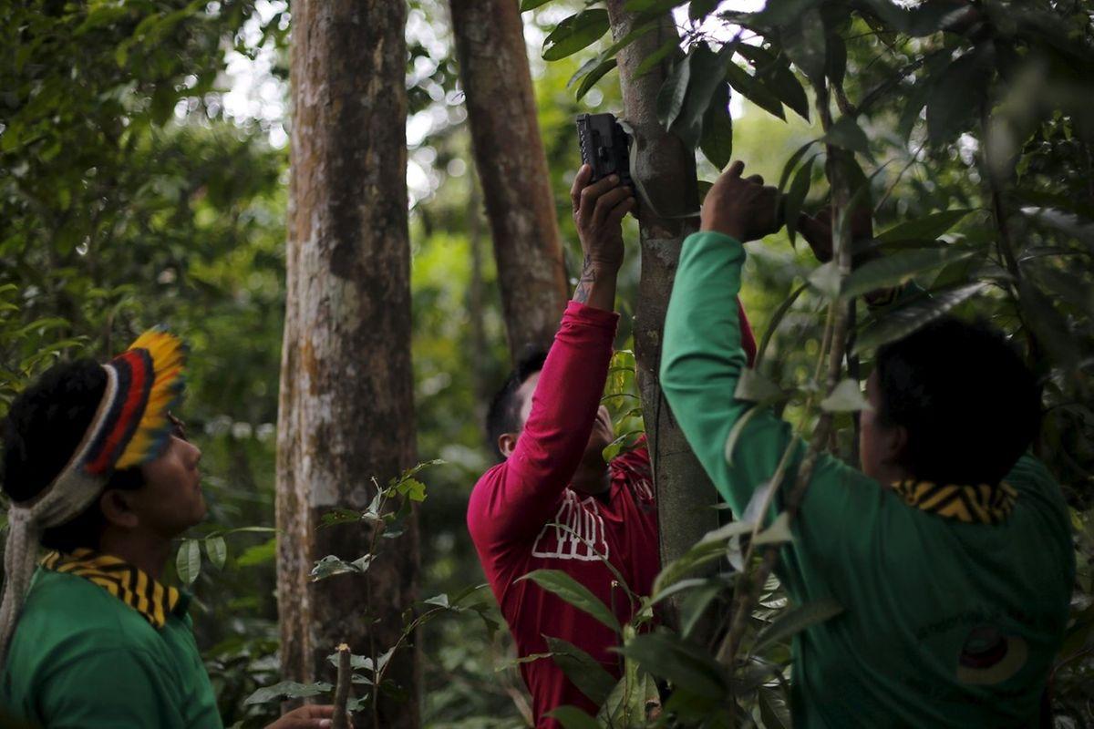 Ka'apor-Indianer befestigen die versteckten Kameras an Bäumen.