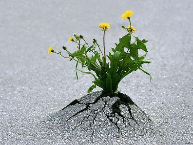 """""""Don't lose hope. Don't despair."""""""